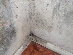 Cracks Damp and Storm Water - Rising damp can cause disease